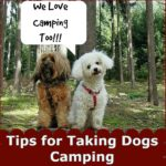Helpful Tips for Taking Dogs Camping