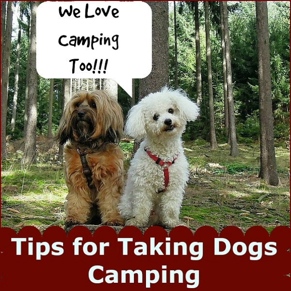 Tips for taking dogs camping