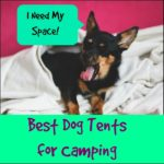 Best Dog Tents for Camping – Our Top Picks!
