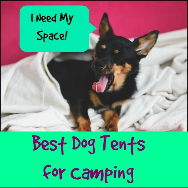 Best Dog Tents for Camping - Our Top Picks!